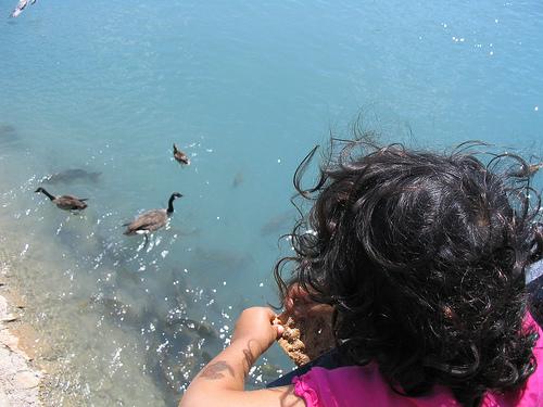 Aller nourrir les canards - crédit photo : tlr3automaton