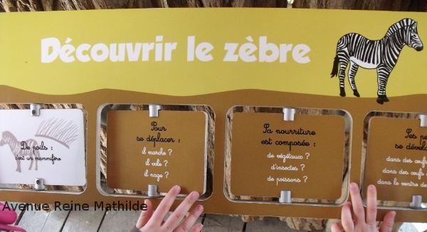 zoo mulhouse zèbre