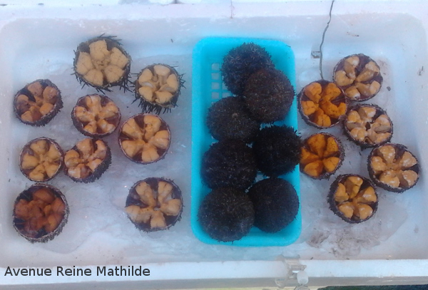 Street food à Hakodate : des oursins.