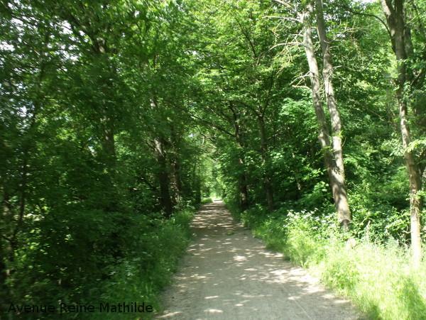Quelque part entre Eguisheim et Colmar