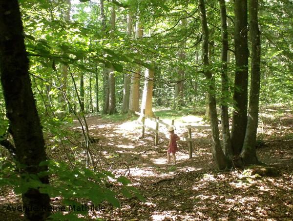 Mini randa en forêt du côté de Vielsam, Belgique
