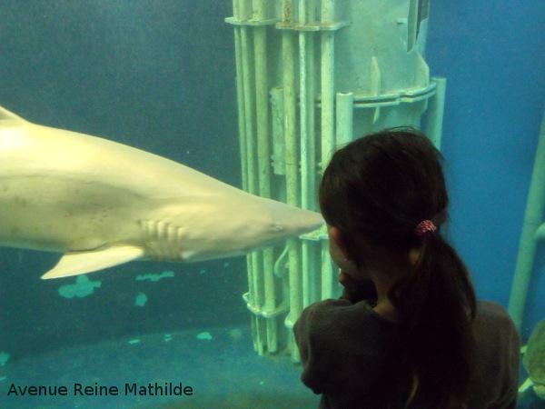 aquarium St Malo