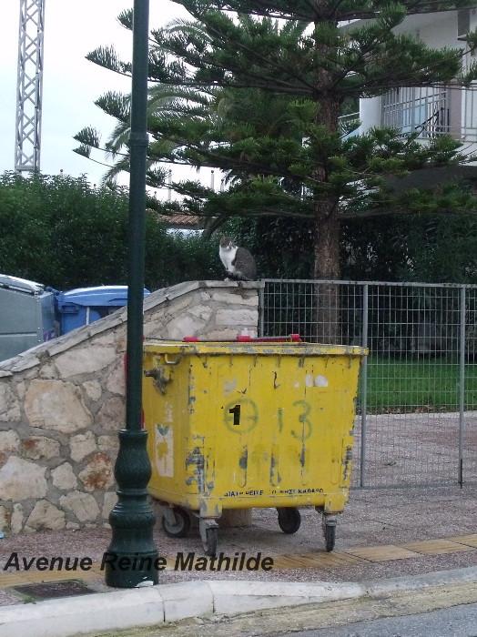 Grèce - novembre 2013 Les poubelles ne sont jamais fermées, les chats s'en régalent, les papiers s'évadent