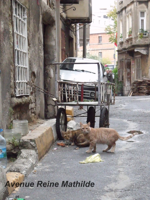 chats d'istanbul (1)