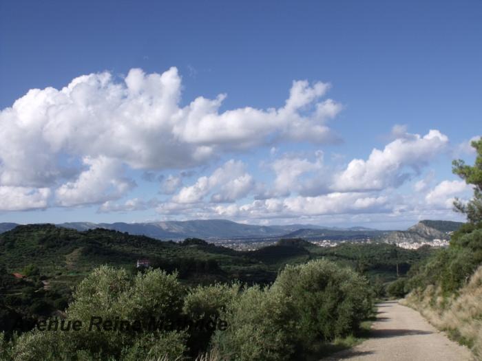 Les oliviers sur l'île de Zakynthos (Grèce)