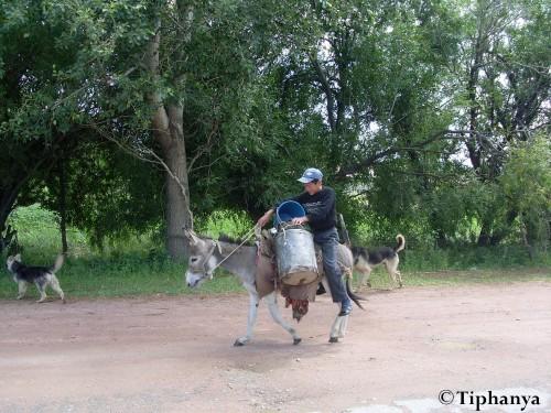 L'âne, moyen de transport de prédilection des jeunes garçons.