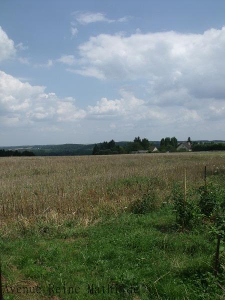 Terrain de chasse des abeilles... - Loiret, juillet 2014