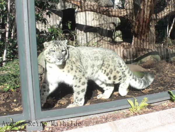 Une journ e d 39 anniversaire paris soleil cookies et crocodiles - Zoo du jardin des plantes tarifs ...