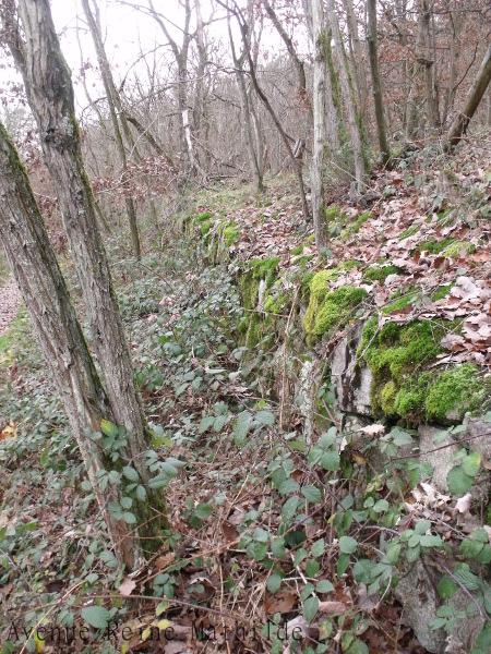 Alsace forêt Ortenbourg (4)