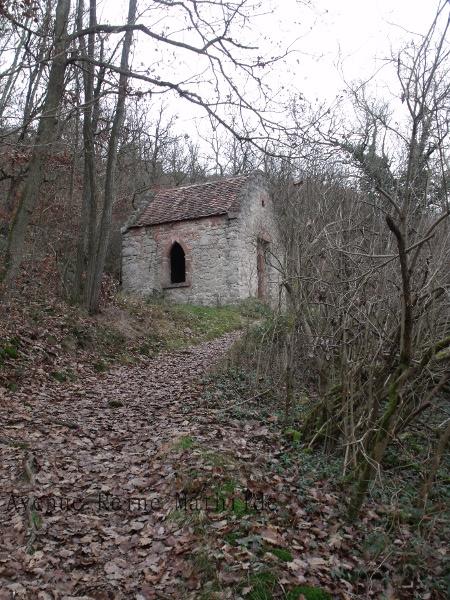 Alsace forêt Ortenbourg (5)