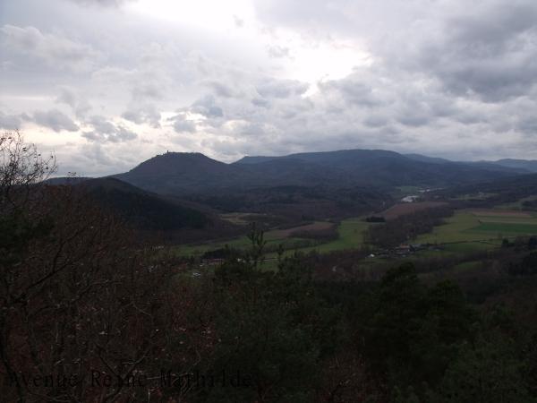 Alsace forêt Ortenbourg (6)