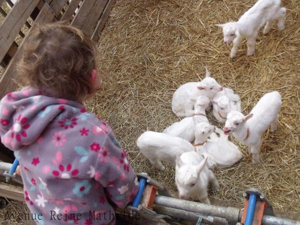 agneaux en Isère