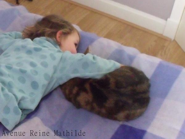 vivre avec des chats - écosse