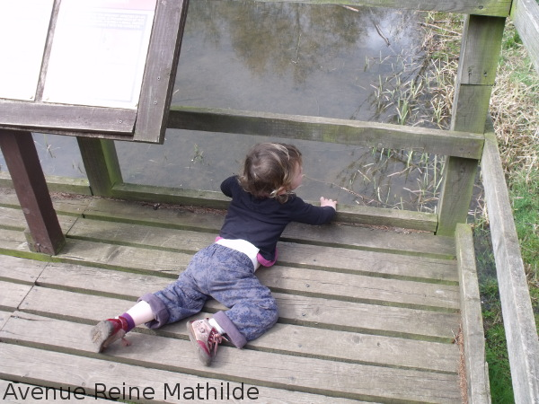 Nine allongée par terre dans un centre de conservation de biches et cerfs en Écosse