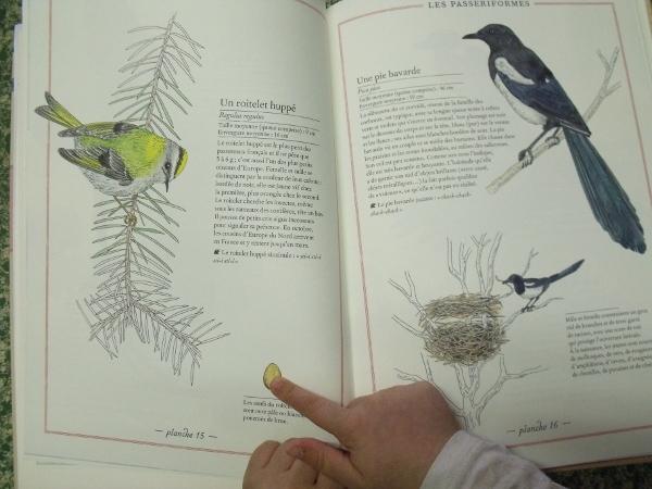 Inventaire illustré des oiseaux - Albin Michel Jeunesse