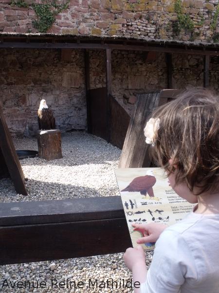 Sortie en famille à la volerie des Aigles, Kintzheim, Alsace