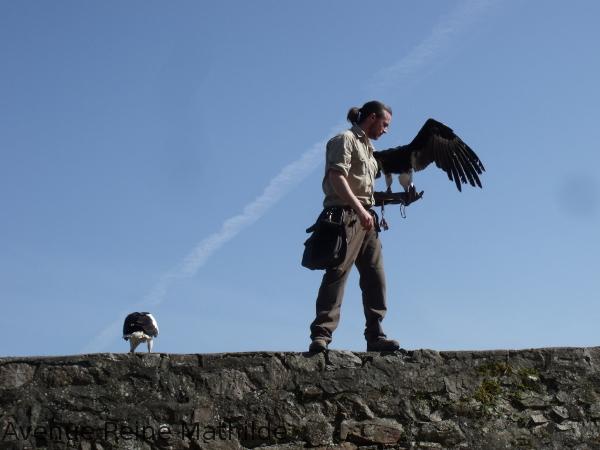 Présentation des vautours pendant le spectacle