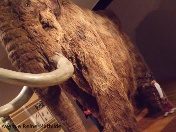 Mammouth du museum d'histoire naturelle à Bâle