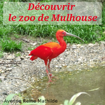 zoo mulhouse ibis rouge