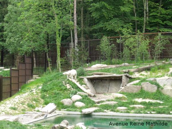 5 bonnes raisons de visiter le zoo de mulhouse avenue reine mathilde. Black Bedroom Furniture Sets. Home Design Ideas