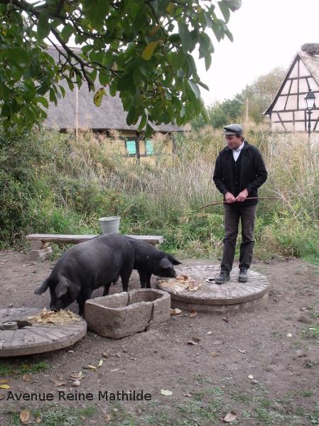 écomusée cochons noirs
