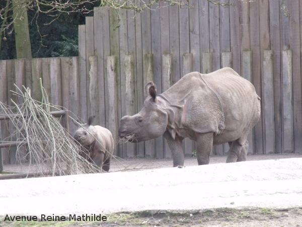 malines zoo plackendael