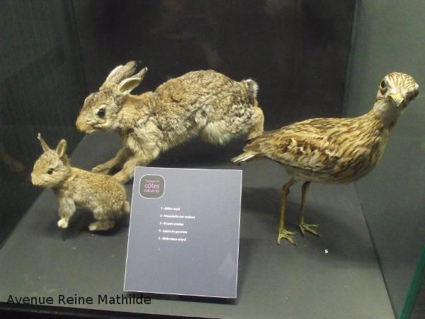 dijon museum lapins