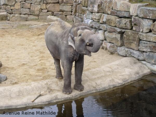 Le zoo héberge une grande famille d'éléphants.