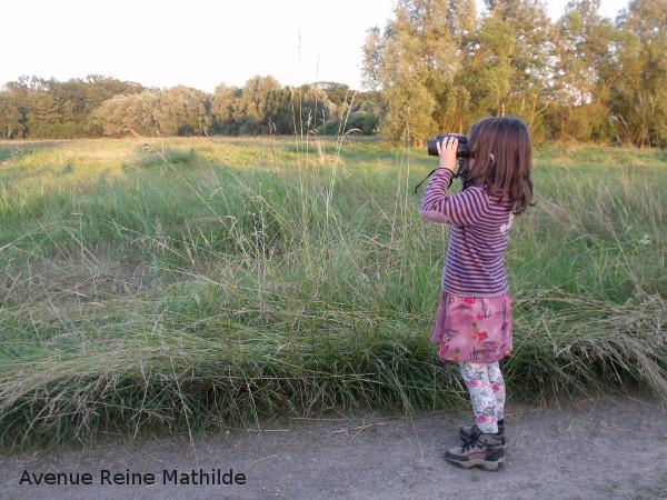 à la découverte de la faune alsacienne