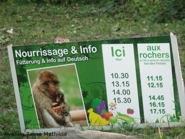 montagne-des-singes-nourrissage