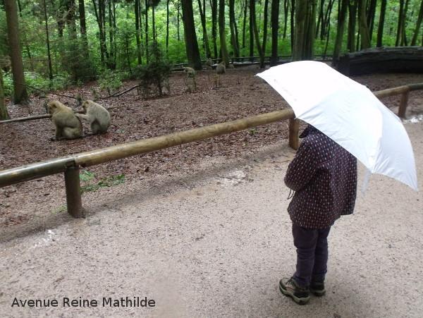 Montagne des singes jour de pluie
