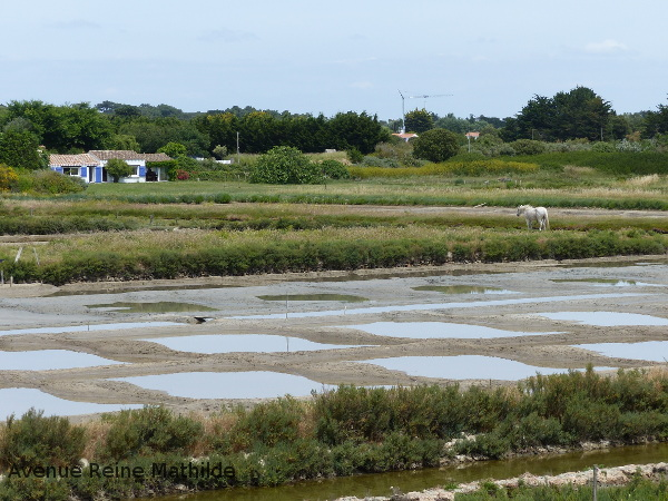 Noirmoutier et ses marais salant