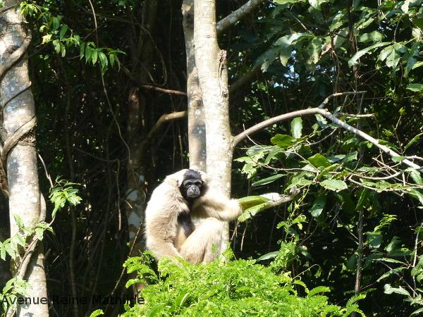 animaux cambodge