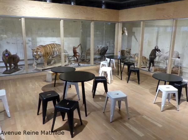 musée d'histoire naturelle Bâle Suisse