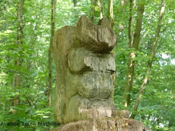 randonner en forêt à Mulhouse