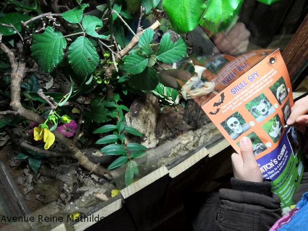 Bristol zoo Halloween
