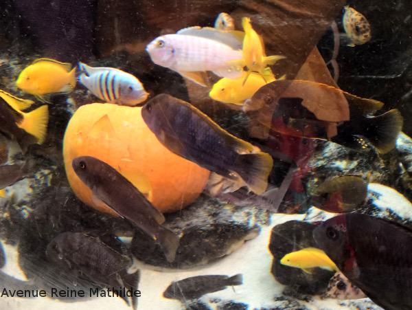 Déco d'Halloween à Bristol aquarium