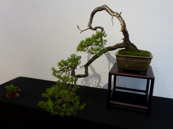 Mulhouse bonsai