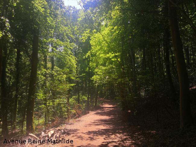Forêt du Waldeck ou Tannenwald