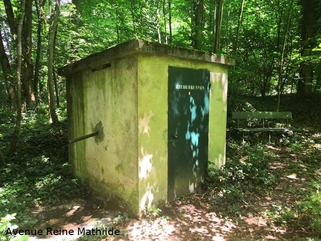 Source protégée en forêt