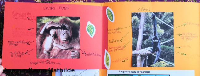 Présentation sur les orangs-outans et les gibbons